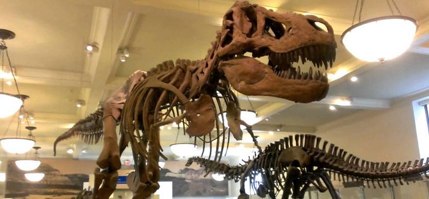 Tiranosaurio Museo Americano de Historia Natural